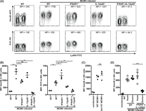 IFN-I or IL-12 are required for GzmB and Prf1 induction in NK cells in a cell intrinsic manner during MCMV infection.(A and B) Mice deficient in IFNAR1 and/or IL-12p40 were infected with WT MCMV at 5000 PFU/mouse. After 3 days, splenocytes were harvested and analyzed for GzmB and Prf1 expression as indicated. Representative contour plots of individual mice are shown in (A). The median fluorescence intensity (MFI) is indicated for each plot and the cumulative data for one experiment is shown in (B). (C) GzmB levels of WT mice infected with 1x105 PFU WT or Δm157 MCMV 2 days after infection. (D) 40x106 WT or IFNAR1-/-xIL-12Rβ2-/- splenocytes were adoptively transferred to congenic host that was simultaneously infected with 1x105 PFU MCMV/mouse. GzmB levels 2 days post-infection in host and transferred NK cells is depicted. Data are representative of three to four independent experiments with individual points representing a single mouse.