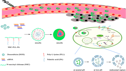 Schematic illustrating the mechanism of micelles for tumor-targeted delivery and synergistic tumor therapy.