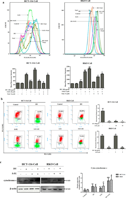 DY and 5-FU synergistically triggered the generation of ROS and disruption of MMP in CRC cells.(a) Cells were pre-treated with or without NAC, followed by DY and/or 5-FU. ROS levels of CRC cells loaded with DCFH-DA probes were evaluated by FCMS. (b) MMP levels were detected by JC-1 dye. JC-1 emits red fluorescence at high MMP levels by forming aggregate, while it emits green fluorescence as monomers at low MMP condition. The ratio of red/green fluorescence is used to indicate MMP levels. The distribution rates of J-aggregate and J-monomer in cells with DY/5-FU treatments are showed in the dot plots and cellular MMP levels are calculated in histograms. (c) After the indicated treatments, the cytosolic and mitochondrial fractions were isolated based on the manufacturer's introduction of Cytochrome c Apoptosis Assay Kit. The expressions of cytosolic cytochrome c in two CRC cell lines were measured by western blotting analysis and normalized by β-actin, respectively. The levels of cytosolic cytochrome c were quantified in right histogram. The results are presented as mean ± SD (n = 3). #P < 0.05, ##P < 0.01, ###P < 0.001, vs control group. While *P < 0.05, **P < 0.01, ***P < 0.001, vs (5-FU + DY) group. αP < 0.05, βP < 0.05 and γP < 0.05, vs the corresponding group without NAC pre-treatment.