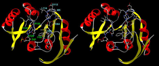 The docking model of AdoMet and guanosine to the Mj0882 structure. Residues predicted to participate in cofactor and target binding are shown in wireframe representation and are labeled in cyan and in green, respectively.
