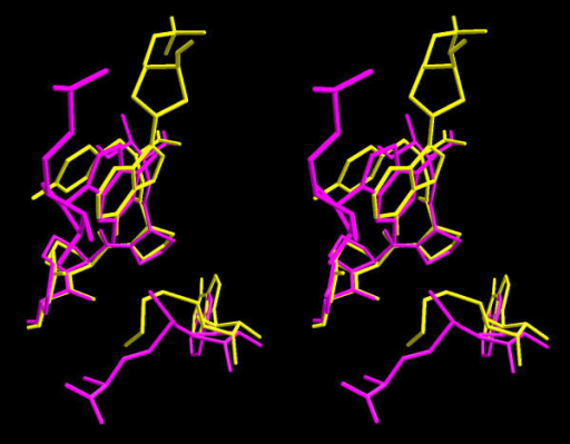 Comparison of positions of the ligands in the active site of M.TaqI and the docked model of Mj0882. M.TaqI is shown in yellow, Mj0882 is shown in magenta.