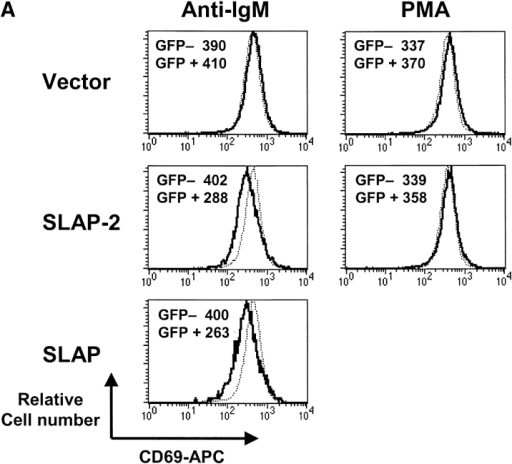 SLAP-2 inhibits antigen receptor signaling in B and T lymphocytes. Epitope-tagged SLAP-2 and SLAP cDNAs in the pTRA-IRES.GFP vector or vector alone were infected into tTA-BJAB or Jurkat cells. Surface CD69 expression was analyzed in stimulated GFP-negative (uninfected; dotted line) and GFP-positive (infected; solid line) cells by analytical gating. The geometric means of APC-CD69 fluorescence are shown for GFP-negative and GFP-positive cells. (A) tTA-BJAB cells stimulated with anti-IgM F(ab′)2 or PMA. Both SLAP-2 and SLAP significantly decrease anti-IgM F(ab′)2-induced but not PMA-induced CD69 expression compared with control. (B) tTA-Jurkat cells stimulated with C305 or PMA. Both SLAP-2 and SLAP significantly decrease C305-induced CD69 expression compared with control. (C) NFAT promoter activation is inhibited by SLAP-2. BJAB or Jurkat-TAg cells were transiently co-transfected with 40 μg pEFBOS-SLAP-2 or vector alone, plus an NFAT-Luciferase reporter construct. Cells were stimulated with anti-IgM F(ab′)2, C305, or PMA plus ionomycin for 12 h, and assayed for luciferase activity in triplicate. Fold induction of luciferase activity over the unstimulated, vector-transfected sample is shown. The basal luciferase activity for this experiment was ∼100 arbitrary light units (AU). The data are representative of several independent experiments. (D) Jurkat-TAg cells were transiently cotransfected with 1, 2, 4, 16, or 32 μg of SLAP-2 DNA and NFAT-Luciferase reporter construct, keeping the total DNA amount constant with empty vector. Cells were stimulated and luciferase assays were performed as above. Equal aliquots of cells were analyzed by anti-FLAG Western blot for SLAP-2 protein expression.