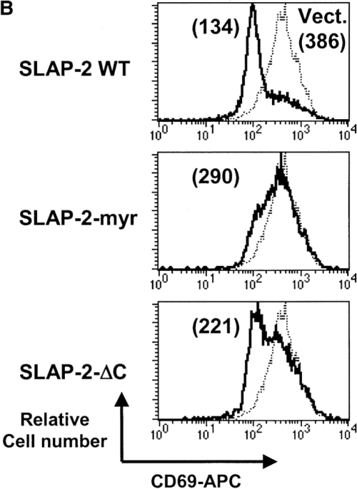 The NH2-terminal myristoylation site and COOH-terminal unique regions of SLAP-2 are required for inhibition of antigen receptor signaling. Epitope-tagged wild-type SLAP-2, SLAP-2-myr, and SLAP-2-ΔC in the pTRA-IRES.GFP vector were stably introduced into tTA-BJAB or tTA-Jurkat cells, and GFP-positive cells were enriched by sorting. Induced surface CD69 expression was analyzed in vector-infected cells (dotted line) and cells infected with wild-type or mutant SLAP-2 (solid line) with analytical-gating on GFP expression. The geometric means of APC-CD69 fluorescence is shown. (A) tTA-BJAB cells stimulated with anti-IgM F(ab′)2.Wild-type (WT) SLAP-2 reduced anti-IgM F(ab′)2-induced CD69 expression by ∼2-fold, whereas SLAP-2-myr and SLAP-2-ΔC resembled the vector control. Percentage of GFP positive cells: vector 91%; wild-type SLAP-2 89%; SLAP-2-myr 80%; SLAP-2-ΔC 87%. (B) tTA-Jurkat cells stimulated with C305. Wild-type SLAP-2 reduced C305-induced CD69 expression by ∼3-fold, whereas inhibition was compromised in cells expressing SLAP-2-myr and SLAP-2-ΔC. Percentage of GFP-positive cells: vector 84%; wild-type SLAP-2 46%; SLAP-2-myr 44%; SLAP-2-ΔC 45%. (C) Equal aliquots of infected tTA-BJAB cells were lysed and analyzed by anti-FLAG Western blot for SLAP-2 protein expression. (D) Equal aliquots of infected tTA-Jurkat cells were lysed and analyzed by anti-FLAG Western blot for SLAP-2 protein expression. (E) Membrane pellet (P) and soluble fraction (S) of wild-type SLAP-2 and SLAP-2-myr–infected tTA-BJAB cells were immunoprecipitated (top panel) or loaded directly (center bottom panels) and immunoblotted with antibodies raised against the FLAG epitope (top panel), the integral membrane protein CD40 (center panel), and the cytoplasmic protein JNK (bottom panel). A fraction of wild-type SLAP-2 but not SLAP-2-myr was localized in the membrane fraction.