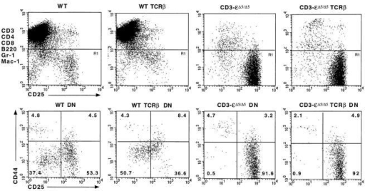 Comparison of the  triple negative thymocyte subsets  from wild type (WT) mice and  CD3-εΔ5/Δ5 mutant mice in the  presence or absence of P14  TCR-β transgene (TCRβ).  Thymocytes were stained with  anti-CD3, -CD4, -CD8, -B220,  -Mac-1, and Gr-1 (all biotinylated and detected with streptavidin tricolor), anti-CD44-PE, and  anti-CD25-FITC. The position  of the window (R1) used to  identify the DN T lineage cells is  shown in the top row for each  type of mouse. In the bottom  row, the DN T lineage cells  were analyzed for the expression  of CD25 and CD44. The percentage of cells found within  each quadrant is indicated.