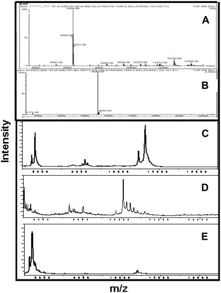 MS analysis: TOF-ES MS spectra of (A) EGF, (B) TGF-α and MALDI, (C) AR, (D) HB-EGF, and (E) ER. EGF and HB-EGF are in dimer states, whereas TGF-α, AR, and ER are in their monomeric state.