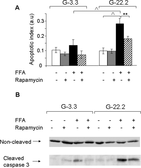 Effect of mTORC1 inhibition by rapamycin on glucose and palmitate-induced β-cell apoptosis.INS-1E cells were incubated at 3.3 and 22.2 mmol/l glucose with 0.5% BSA with and without 0.5 mmol/l palmitate and 50 nmol/l rapamycin for 16 h. Apoptosis was assessed using the Cell Death ELISAPLUS assay (Roche Diagnostics) (A) and by Western blot for cleaved caspase 3 (B). Results are expressed as means±SE of 4 individual experiments, each performed in triplicates (A). A representative gel of 3 individual experiments showing the expression of cleaved and uncleaved caspase 3 is presented (B). ** p<0.01, ∧ p<0.001 for the difference between the indicated groups.