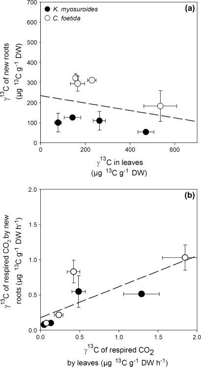 (a) Labelling-derived 13C content of new roots in relation to labelling-derived 13C content of leaves and (b) labelling-derived 13C content of CO2 respired by the new roots in relation to the labelling-derived 13C content of CO2 respired by the leaves for K. myosuroides (filled symbols) and C. foetida (open symbols) at each chase time. Values are the mean ±SE (n=3). See text for further statistical details.