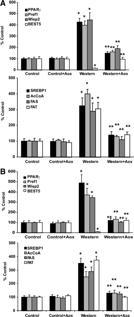Maternal antioxidant supplement normalizes gene expression in fat tissue from offspring of obese dams. Visceral fat tissue was harvested from 2-week-old (A) and 2-month-old (B) offspring and mRNA isolated as described in methods. Data shown are ± SEM; n = 4 litters for each group; *P < 0.05 Western diet versus control, control+Aox, and Western+Aox; **P < 0.05 versus Western+Aox versus Western diet.