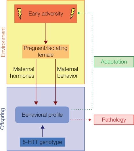 maternal behaviors and their effect on