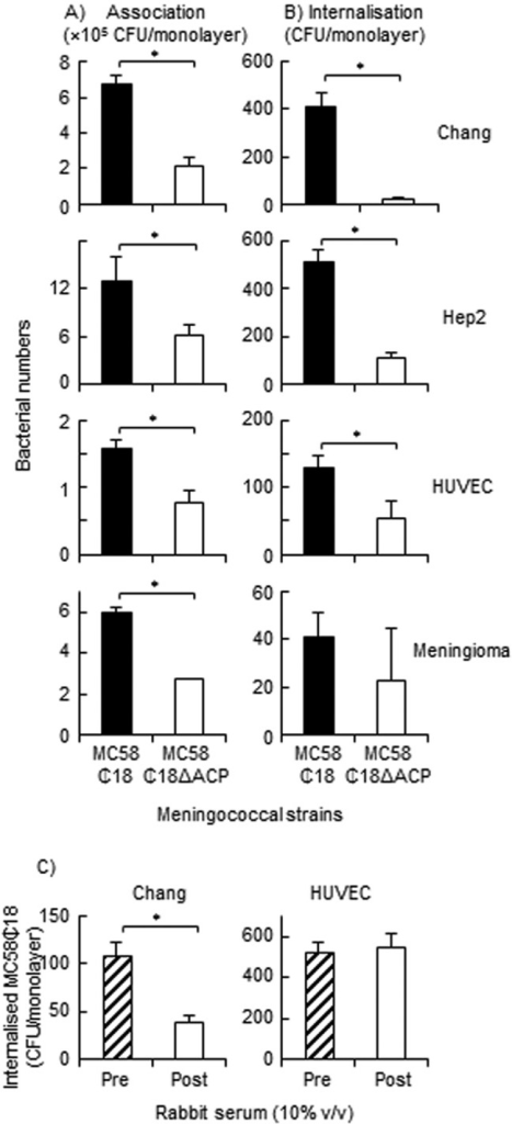 (A and B)  Role of ACP in meningococcal invasion of human cells. Chang, Hep2, HUVEC, and meningioma cell monolayers were challenged with MC58 ¢18 and MC58 ¢18 ΔACP strains (MOI, 100 to 200), and the numbers of both associated and internalized bacteria were quantified. Results of representative experiments for each cell line are shown, as reported by Virji et al. (15). Experiments were repeated 3 times, and the differences in association and/or invasion between the strains were reproducible between experiments, regardless of any quantitative variations between experiments. (C) Effect of rabbit anti-rACP serum on internalization of MC58 ¢18 strain into Chang epithelial cells and HUVECs. Cell monolayers (n = 3 experiments for each cell line) were infected for 4 h with strain MC58 ¢18 in the presence of 10% (vol/vol) preimmune and postimmune rabbit anti-rACP serum and the numbers of internalized bacteria quantified. For all figures, the columns represent the numbers of associated and/or internalized bacteria and the error bars the standard deviations of the results determined with triplicate wells. *, P < 0.05.