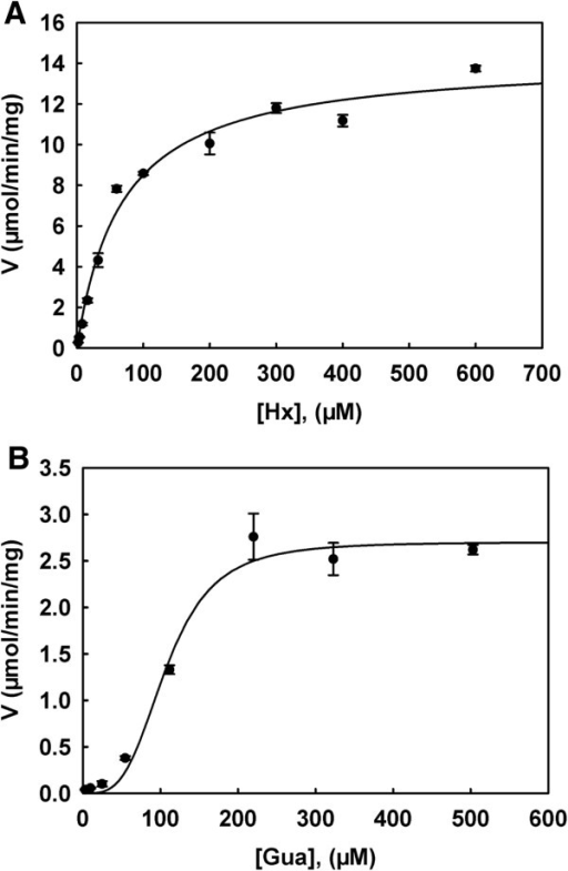 Substrate saturation curves of hypoxanthine (A) and guanine (B) with Mpn HPRT. Kinetic parameters for Hx and Gua were determined by using the DE81 filter paper assay with [3H]-Hx and [3H]-Gua as the labelled substrates as described in the experimental procedures. Data are from at least three independent measurements and are presented as mean ± standard deviation (SD).