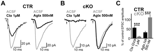 Expression of functional CaV2.1 channels is strongly reduced in the hippocampus of cKO mice.(A and B) Representative EPSCs recorded in CA1 PCs evoked by extracellular stimulation of the stratum radiatum before (gray) and after (black) bath-application of ω-conotoxin GVIA (left) or ω -agatoxin IVA (right). PC recordings were obtained from CTR (A) and cKOs (B). (C) Bar graph summarizes the residual peak amplitude of EPSCs after toxin application for CTR (each 6 experiments) and cKO (5 vs. 6 experiments) mice. Means + SEM are shown. *** P≤0.001 (Two-tailed Student's t-test)