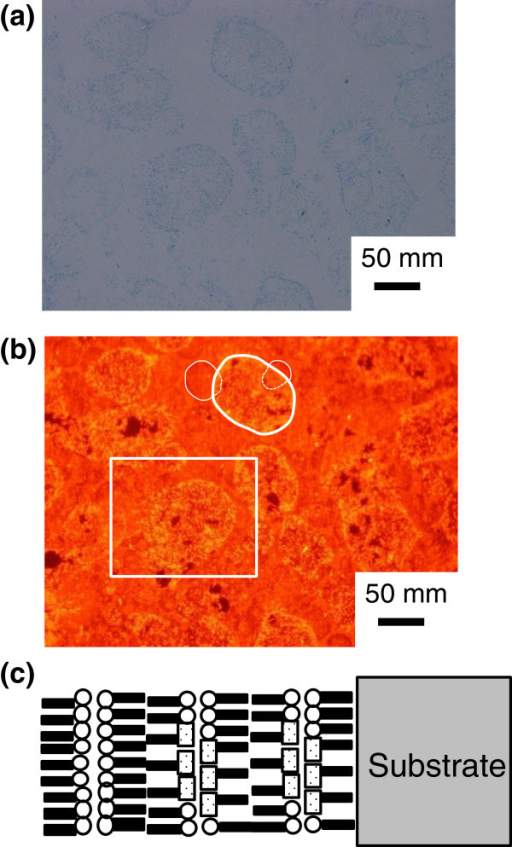 A BF microscopy image and the FL microscopy image of the MS-C20 mixed LB film. A BF microscopy image (a) and the FL microscopy image (red fluorescent image with 540-nm excitation) (b) of the MS-C20 mixed LB film of four layers after HTT (80°C, 60 min) with the schematic layered structure (c). The surface of the MS-C20 binary LB film is covered by a double layer of cadmium arachidate.