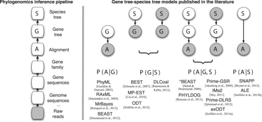 Gene tree–species tree models in the context of the phylogenomics inference pipeline. Left: the inference pipeline (some steps are not represented, such as sequencing error correction). Right: graphical representation of the inferential problem for a selection of the models and associated phylogenetic software discussed in the main text. The sequence of steps in the graphical model representations correspond to the hierarchical sequence of evolutionary process generating genomic sequences (cf. Fig. 1). The likelihood that must be computed is also shown. Graphical model conventions are observed: stochastic nodes, nodes corresponding to data considered as known are gray, and nodes whose states are inferred are in white. The models have been simplified, and parameters others than the gene tree and the species tree have not been represented.