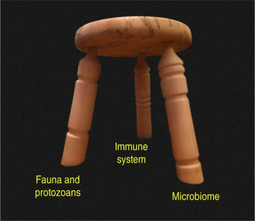 The three-legged stool analogy. The ecosystem of the human body is stabilized by immune function in concert with distinct and independent components of the biome. In this model, protozoans are placed with the fauna rather than the microbiome because (a) they exert some of the same effects on the immune system as the fauna, and (b) they are not normally considered in most modern studies of the microbiome, being virtually eliminated from the human biome by Western culture. Loss or substantial alteration of any one leg has the potential to destabilize the entire system, although current evidence suggests that the fauna/protozoan leg exists naturally without requirements for specific species. That is, the fauna/protozoan leg is highly variable in the human population in terms of its species composition, although the complete absence of this leg apparently has very detrimental consequences for the ecosystem as a whole (46). The microbiome leg, in contrast, contains many species that are required for normal function, whereas other species may vary from individual to individual depending on diet and other factors. The three-legged stool in the photograph was designed and created by Kim Turk.