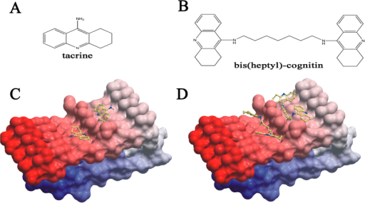 The potential interaction between bis(heptyl)-cognitin and Aβ.(A) Chemical structure of tacrine. (B) Chemical structure of bis(heptyl)-cognitin. Low-energy binding conformations of bis(heptyl)-cognitin (C) or tacrine (D) bound to the surface of Aβ assemblies (Gly33-Met35 and Met35-Gly37) generated by molecular docking. The small molecule is depicted as a ball-and-stick model showing carbon (yellow), nitrogen (blue), and hydrogen (dark grey) atoms. The Aβ assemblies are shown as skin representation.