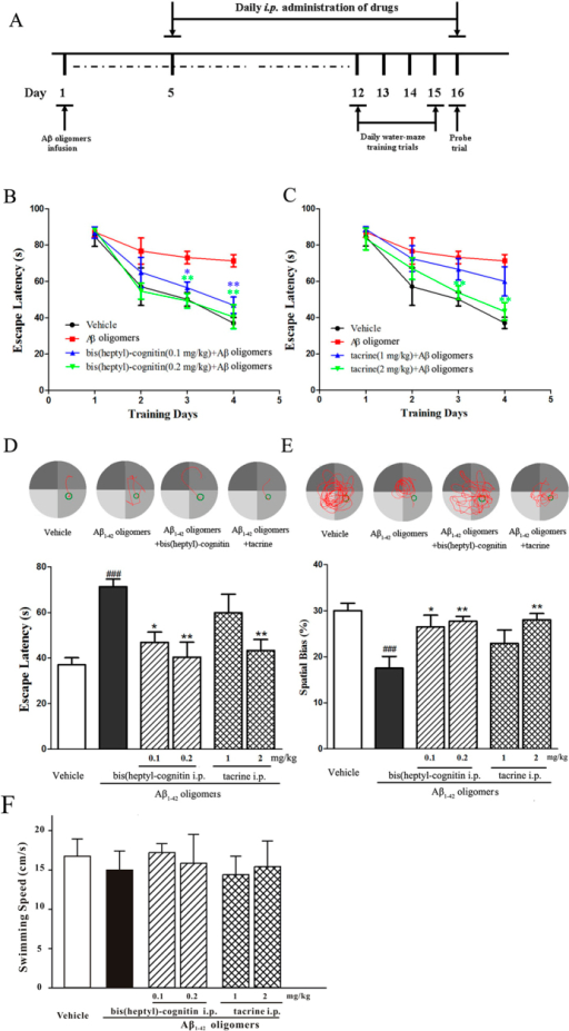 Bis(heptyl)-cognitin prevents the memory deficits induced by intra-hippocampal infusion of Aβ1–42 oligomers in mice (n = 6 for each group).(A) The schedules of animal experiments. (B,C) Mean latencies to escape from the water onto the hidden platform. Each mouse was subjected to two trials per day for 4 consecutive days. (D) Upper: typical swimming-tracking path of vehicle control, Aβ1-42 oligomers-treated mice, bis(heptyl)-cognitin 0.2 mg/kg plus Aβ1-42 oligomers-treated mice, and tacrine 2 mg/kg plus Aβ1-42 oligomers-treated mice on the fourth training day. Lower: mean latencies to escape from the water onto the hidden platform on the fourth training day. (E) Upper: typical swimming-tracking path of of vehicle control, Aβ1-42 oligomers-treated mice, bis(heptyl)-cognitin 0.2 mg/kg plus Aβ1-42 oligomers-treated mice, and tacrine 2 mg/kg plus Aβ1-42 oligomers-treated mice in the probe trial. Lower: the swimming distance in the target quadrant (in which the platform had been placed during the training phase) in the probe trial. (F) Average swimming speed in the probe trial. Data represent means ± SEM. ###p < 0.001 vs. vehicle group; *p < 0.05 and **p < 0.01 vs. Aβ1-42 oligomers-treated group in (B-E) (Tukey's test).