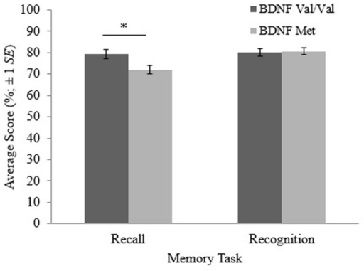 Recall and recognition scores for participants with the brain-derived neurotrophic factor (BDNF) val/val genotype and participants with at least one copy of the BDNF met allele. The error bars are based on ±1 SE. *p < 0.05.