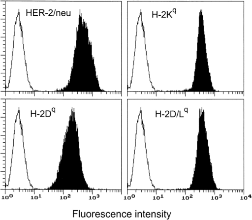 Cytofluorometric analysis of HER-2/neu and MHC class I glycoprotein expression in Neu/H-2q cells. Open profiles represent cells stained with secondary antibody alone; solid profiles represent cells incubated with the indicated antibodies. In each panel, the ordinate represents the number of cells. Data from an experiment representative of at least three similar experiments are shown.
