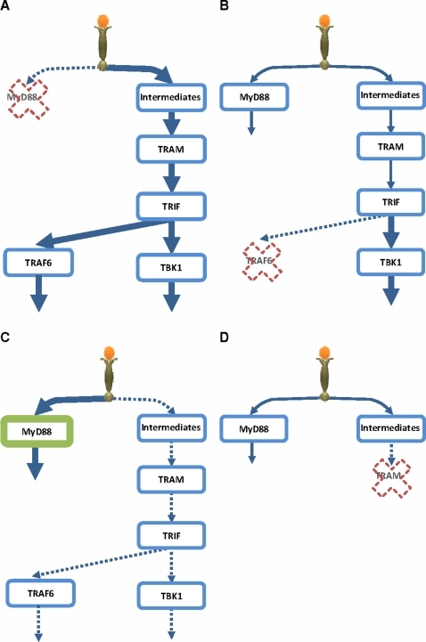 Schematic representation of Signaling Flux Redistribution (SFR).(A) removal of MyD88 results in enhancement of TRAM-dependant pathway, (B) removal of TRAF6 results in enhancement of TRAM-dependant pathway downstream of TRIF, (C) overexpression of MyD88 downregulates TRAM-dependant pathway, (D) removal of TRAM does not enhance the MyD88-dependant pathway due to upstream intermediates. * signaling molecules/events upstream of TRAM [9], [25], [26].