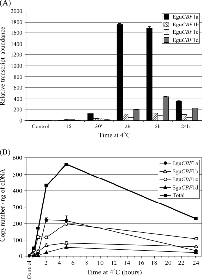 Time-course of EguCBF1 gene expression at 4 °C in the dark. Total RNA was extracted from a pool of leaves harvested before cold exposure (control), after 15 min, 30 min, 2 h, 5 h, and 24 h. (A) The relative EguCBF1 transcript abundance was determined as described in the legend of Fig. 2. (B) Copy number ng−1 of cDNA of EguCBF1 genes was calculated using a standard curve (see the Materials and methods for details). For transcript copy number ng−1 of cDNA values, closed circles, open triangles, open circles, closed triangles, and closed squares correspond to EguCBF1a, EguCBF1b, EguCBF1c, EguCBF1d genes, and the total amount of the EguCBF1 genes, respectively.
