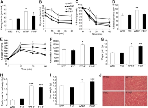 Transgenic restoration of long-chain n-3 PUFA protects against obesity-linked insulin resistance and glucose intolerance. A: HF-diet–induced elevation of fasting plasma insulin was prevented by transgenic restoration of n-3 derived resolution mediators (n = 4–9). B: Glycemic excursion from 1.5 U/kg i.p. ITT was normalized in HF-fed F1 mice (n = 8–12). C: Glycemic excursion expressed as percent basal glycemia. D: Percent basal glycemia at T = 15 min after insulin injection. E: Glycemic excursion from 1g/kg i.p. GTT expressed as percent basal glycemia (n = 7–11), and (F) area under the curve from GTT show that HF-fed F1 mice are partially protected from glucose intolerance. G: HF-fed F1 mice develop similar obesity to wild-type mice. Weight gain (n = 16–20). H: Epididymal fat pad weight (n = 9–14). I: Liver weight (n = 9–14). J: Representative hematoxylin and eosin stained liver sections showing similar accumulation of fat vesicles in both WTHF and F1HF mice. All data are mean ± SEM, ND not detected, *P < 0.05, **P < 0.01, ***P < 0.001 versus respective chow-fed control; †P < 0.05 versus WTHF. (A high-quality color representation of this figure is available in the online issue.)