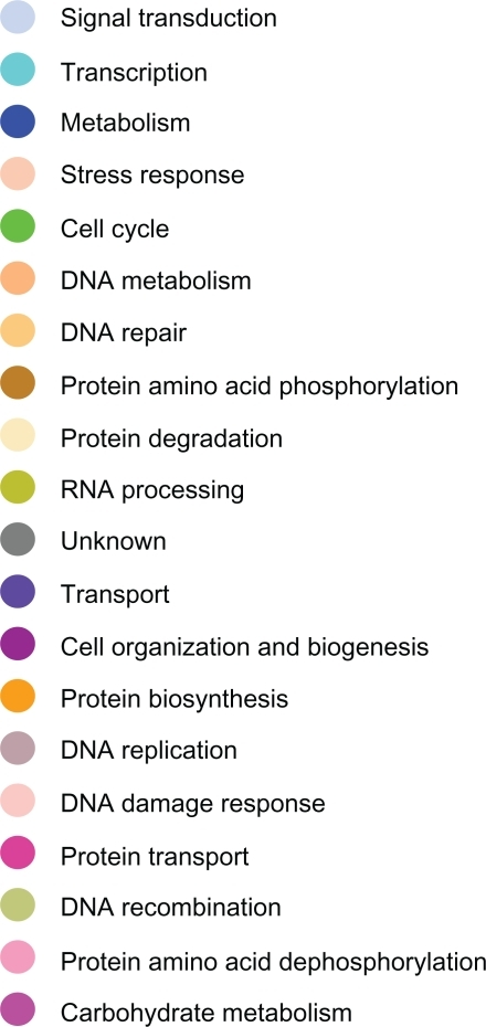 Color codes indicating the biological process in which genes reported in figures 4–7 are involved.