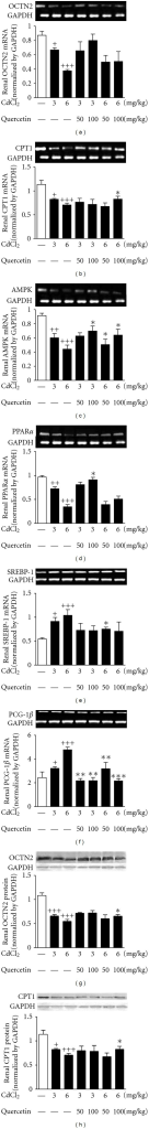 Effects of a 4-week treatment of CdCl2 and coadministration of quercetin on expression of OCTN2 (a), CPT1 (b), AMPK (c), PPARα (d), SREBP-1 (e), PGC-1β (f) at mRNA levels, and OCTN2 (g) and CPT1 (h) at protein levels in renal cortex of rats. The mRNA levels or protein levels were normalized by GAPDH, respectively. Values are mean ± SEM of n = 4–6 in each group. P value CdCl2 versus control at + < 0.05, ++ < 0.01, and +++<0.001; treatment versus CdCl2 at *<0.05, **<0.01, and ***<0.001 for LSD post hoc test.