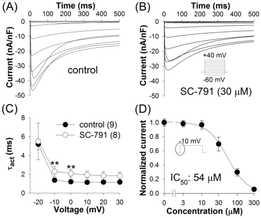 Inhibition of L-type Ca2+ channels by SC-791.L-type currents in larval body-wall muscles in control (A) and in the presence of 30 μM SC-791 (B) were elicited by 500 ms voltage pulses between −60 and +40 mV in 10 mV increments from a holding potential (HP) of −40 mV; averaged traces are shown. (C) SC-791 slowed activation of L-type Ca2+ channels. Activation time constants were determined by fitting the rising part of the current with a single exponential function; (n), number of experiments. (D) Dose-response relation for inhibition of the peak L-type current by SC-791 at −10 mV; the curves in this and following dose-response relations represent fits to Hill equation.