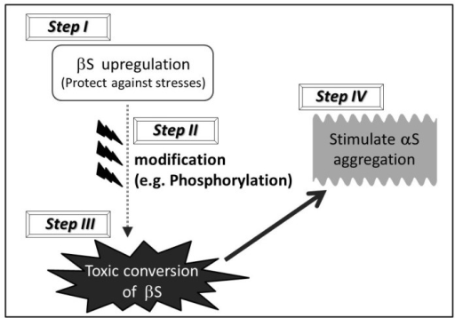Schematic hypothesis of a multiple-step mechanism through which βS may stimulate the pathogenesis of sporadic α-synucleinopathies.