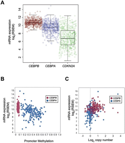 C/EBPβ is not altered in human lung adenocarcinoma.(A) mRNA expression of CEBPA, CEBPB, and CDKN2A in TCGA lung adenocarcinoma dataset. RSEM values obtained from TCGA data were log2 transformed and depicted as individual dots representing a sample and box plot. (B) Methylation status in CEBPA and CEBPB promoter regions in TCGA lung adenocarcinoma dataset. Scatter plot depicts mRNA expression in Y-axis and methylation level of the promoter region in X-axis of CEBPA and CEBPB genes. (C) Copy number estimates of CEBPA and CEBPB gene loci in TCGA lung adenocarcinoma dataset. Scatter plot depicts mRNA expression in Y-axis and copy number estimates in log2 scale in X-axis of CEBPA and CEBPB genes.