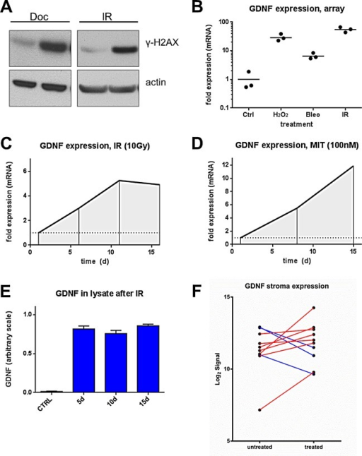 DNA damage induces GDNF expression in human prostate fibroblasts(A) Western blot probing for DNA damage marker y-H2AX post Docetaxel (DOC) (50 nM) and irradiation (IR) (10 Gy) in PSC27 cell lysates. (B) Gene expression microarray data of GDNF in human prostate stromal cells treated with hydrogen peroxide (H2O2), Bleomycin (Bleo) and irradiation (IR) on log scale. qPCR data showing up-regulation of GDNF after (C) irradiation between 6 and 16 days post treatment and after (D) mitoxantrone (MIT) treatment between days 7 and 15 post treatment. (E) ELISA assay measuring GDNF protein in cell lysates (Ly) 5d, 10d and 15d after DNA damage induced by irradiation (10 Gy) compared to non-irradiated control (CTRL). (F) GDNF transcript level changes measured by microarrays in micro-dissected CaP stroma after treatment with DOC and MIT in 10 paired patient samples.