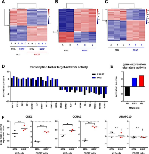 GDNF induces gene expression changes via the activation of transcription factor networksHeat map profiles of gene expression changes upon GDNF stimulation in (A) epithelial and stromal prostate cancer cells, (B) in M12 epithelial cells alone, and (C) in PSC27 PPFs alone. (D) Activation scores for transcription factor target gene groups after GDNF stimulation in PSC27 (black) and M12 (blue) cells. (E) Activation scores for RB, E2F1 and AR target gene groups after GDNF stimulation in epithelial CaP cells. (F) Gene expression changes of known E2F1 and AR target genes with enhancer modules regulated by GDNF stimulation.