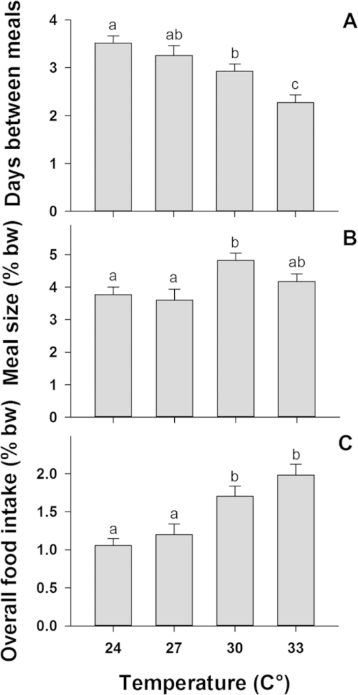 The feeding frequency, meal size and average overall food intake of common coral trout (Plectropomus leopardus) across four temperature treatments. Values of meal size and overall food intake are in % body-weight (% bw) and error bars are standard error of the mean. Significant differences across temperatures are indicated with letters above each column. (A) shows the number of days between meals; (B) shows average meal size, and (C) shows the average overall food intake at each temperature treatment.