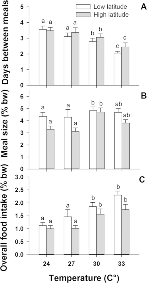 Differences in (A) feeding frequency, (B) meal size and (C) average overall food intake between a low latitude (warm water) and a high latitude (cold water) population of common coral trout (Plectropomus leopardus) across four temperature treatments. Values of meal size and overall food intake are in % body-weight (% bw) and error bars are standard error of the mean. Significant differences within and across temperatures and populations are shown above each column.