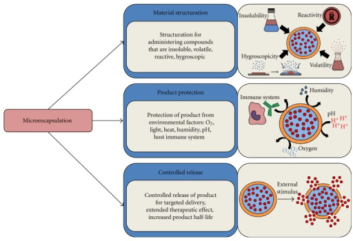The main biopharmaceutical goals of microencapsulation: microencapsulation can be used to achieve material structuration, therapeutic product protection, and targeted delivery and/or controlled release of the encapsulated biotherapeutics.