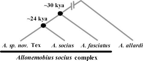 reaction paper the socius and the If, indeed, the current a fasciatus-a socius hybrid zone is maintained primarily by a socius females migrating northward into a fasciatus populations and mating preferentially with a fasciatus males.