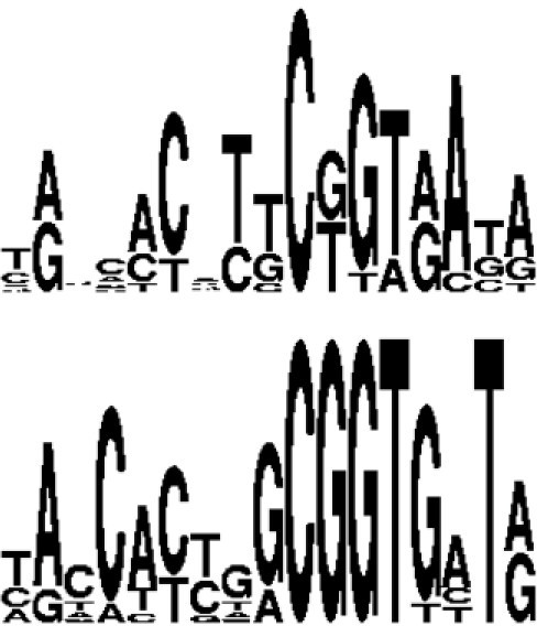 "Logos obtained from the ten best binding sequences according to the experimental data of Sarai et al. (ref. [61]) (lower panel) and according to the computations on ""non-specific"" complexes complexes with no sequence or thermodynamic data information (upper panel)."