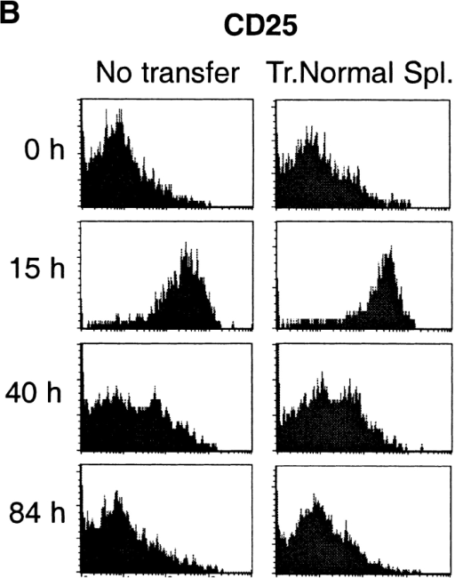 Analysis of activation of OVA-specific T cells. (A) Variation in KJ1–26+CD4+ lymphocyte number in spleens of 17/9 DO11.10 immunized mice. Mean and SD of groups of three mice per time-point are shown. Filled diamonds: 17/9 DO11.10 RAG−/− mice; filled triangles: 17/9 DO11.10 RAG−/− mice transferred with 2 × 107 normal splenocytes; filled squares: 17/9 DO11.10 RAG+ mice. (B) CD25 expression in KJ1–26+CD4+ lymphocytes is not affected by regulatory lymphocytes. FACS® histogram profiles of KJ1–26+CD4+ gated spleen cells from 17/9 DO11.10 RAG−/− mice (No transfer) and 17/9 DO11.10 RAG−/− mice that were transferred with 2 × 107 normal spleen cells one day before immunization (Tr. Normal Spl.). (C) Analysis of cell division of OVA-specific CD4+ lymphocytes. Spleen cells from DO11.10 RAG−/− mice (which contain monoclonal anti-OVA T cells) were labeled with CFSE and transferred (106 OVA-specific T cells) alone or together with unlabeled 2 × 107 normal splenocytes, into 17/9 DO11.10 RAG−/− mice. Recipient mice were immunized 1 d after transfer. Cell division of transferred cells in the spleen was analyzed at several times after immunization. The top three panels illustrate the gating of KJ1–26+CD4+CFSE+ cells and the determination of CFSE intensity intervals defined by CFSE fluorescence peaks (1 to 6, with peak 6 representing T cells that did not divide). The bottom three panels show the distribution of KJ1–26+CD4+ CFSE+ cells (as percentage of total KJ1–26+CD4+ CFSE+) into CFSE fluorescence intervals (numbers 1 to 6 in top panel). Filled diamonds: 17/9 DO11.10 RAG−/− mice; filled triangles: 17/9 DO11.10 RAG−/− mice transferred with 2 × 107 normal splenocytes.