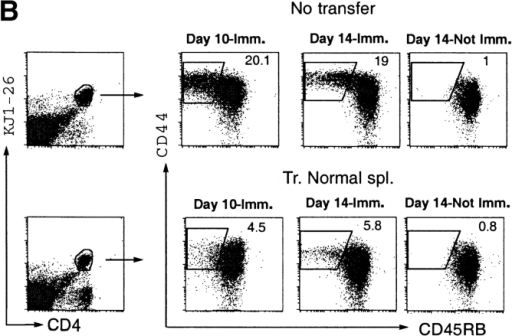 Effector/memory Th2 development and germinal center formation are inhibited by regulatory lymphocytes. (A) Cytokine production by OVA-specific T cells after immunization. Spleen cells from 17/9 DO11.10 RAG−/− immunized mice (No transfer) or 17/9 DO11.10 RAG−/− mice that were transferred with 2 × 107 normal spleen cells one day before immunization (Tr. Normal Spl.) were analyzed for the production of IL-4 and IFN-γ by intracellular staining. Cells were stimulated in vitro with OVA peptide and processed as described in Materials and Methods. The graphic shows anti–IL-4 and anti–IFN-γ plots of KJ1–26+CD4+ gated spleen cells. Unimmunized mice display less than 0.1% of KJ1–26+CD4+ positive cells with either anti–IL-4 or anti–IFN-γ antibodies and no detectable population of IL-4+IFN-γ+ double-positive cells. (B) CD44/CD45RB staining of KJ1–26+CD4+ gated spleen cells from 17/9 DO11.10 RAG−/− immunized mice (No transfer) or 17/9 DO11.10 RAG−/− mice that were transferred with 2 × 107 normal spleen cells one day before immunization (Tr. Normal Spl.). Unimmunized controls analyzed simultaneously as day 14 samples are also shown. (C) Decreased number of PNA+ cells in 17/9D011.10 RAG−/− mice transferred with normal splenocytes. PNA/HA staining is shown for B220+ gated splenocytes from 17/9 DO11.10 RAG−/− mice (No transfer) and from 17/9 DO11.10 RAG−/− mice that were transferred with 2 × 107 normal spleen cells (Tr. Normal Spl.). Unimmunized controls analyzed simultaneously with the 10-d immunization samples are also shown. As expected, germinal center B cells showed downregulation of the B cell receptor.
