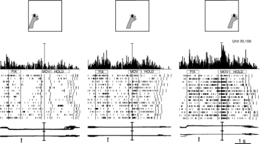 V6A neuron spatially tuned during the execution of reaching movements in the foveal reaching task. Note that in this task the location of reaching target and that of fixation point were always spatially coincident. Scale bar in PSTHs: 85 spikes/s. Other details as in Fig. 2.
