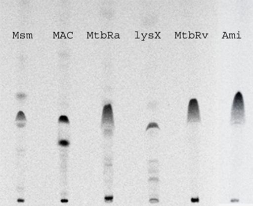thin layer chromatography of steroid hormones essay