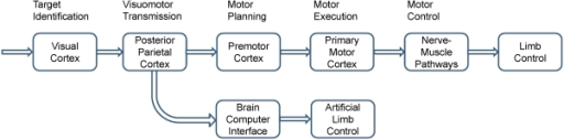 Information flow in a visuomotor control pathway and a BCI control pathway for a motor response.