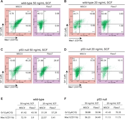 Fbxo7 expression alters the expression of markers of myeloid differentiation.FACS analysis of immunostaining for Mac1 (CD11b) on the x-axis and Gr1(Ly6C/G) on the y-axis for WT cells grown at 50 ng/mL (A) or 20 ng/mL (B) of SCF. FACS analysis of immunostaining for Mac1 (CD11b) and Gr1(Ly6C/G) for p53  cells grown at 50 ng/mL (C) or 20 ng/mL (D) of SCF. Table of percentages of either Mac1 (CD11b) or Gr1(Ly6C/G) positive cells for WT cells (E) and p53  cells (F).