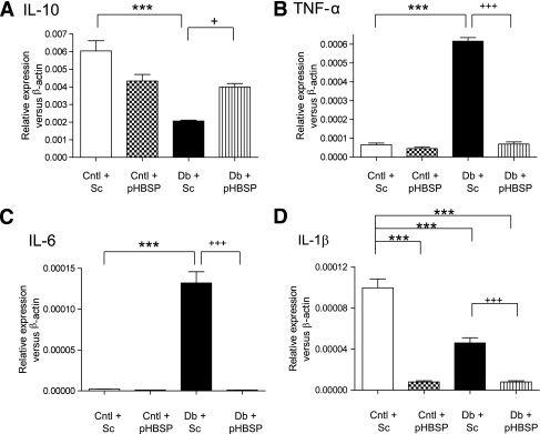 Cytokine expression in the diabetic retina is regulated by pHBSP A: IL-10 was decreased in the diabetic rat with scrambled pHBSP relative to the control with scrambled pHBSP (***P < 0.001). The level of IL-10, the anti-inflammatory cytokine, was elevated again with pHBSP in the diabetic rat when compared with the scrambled pHBSP (+P < 0.05). B: TNF-α was increased in the diabetic rat, which received 10 μg/kg of scrambled pHBSP, relative to the control, which received the scrambled pHBSP (***P < 0.001). This elevated level in the diabetic rat was significantly decreased with the active pHBSP (+++P < 0.001). C: IL-6 was increased in the diabetic rat, which received 10 μg/kg of scrambled pHBSP, relative to the control, which received the scrambled pHBSP (***P < 0.001). This elevated level in the diabetic rat was significantly decreased with the active pHBSP (+++P < 0.001). D: STZ-induced diabetes caused a reduction in IL-1β levels when compared with control tissue treated with scrambled peptide (***P < 0.001). Treatment with pHBSP caused a reduction in IL-1β levels both in nondiabetic tissue and diabetic tissue (***P < 0.001; +++P < 0.001). The number of animals in each group was six. Cntl, control; Sc, scrambled pHBSP; and Db, diabetic.