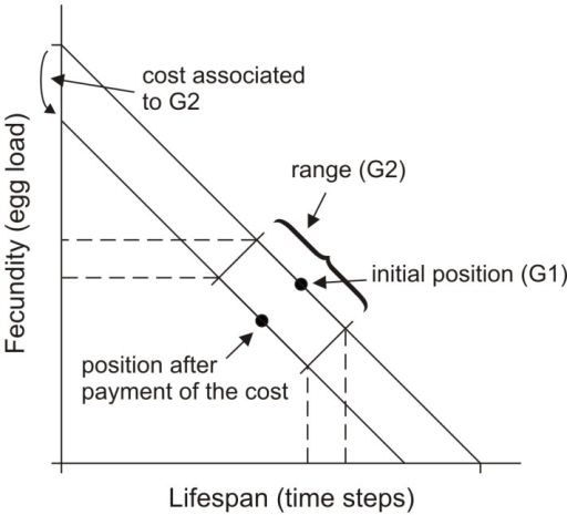 Trade-off between lifespan and egg load describing the main parameters used in the simulation model.The initial reproductive strategy is defined by G1 and each animal has a certain phenotypic plasticity defined by the range G2, but pays a linearly proportional cost for it, both in survival time and egg load. A third parameter G3 (not shown) defines a learning ability used by the animal to move along such a phenotypic plasticity. Optimal values of the parameters G1, G2 and G3 in different habitats are estimated by means of a genetic algorithm (see text).