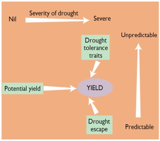 Schematic Diagram Of Three Components Of Yield Under Dr Open I