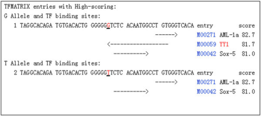 Prediction of TF binding sites in the different alleles of rs1271572. The results from the TFSEARCH (http://www.cbrc.jp/research/db/TFSEARCH.html) prediction of transcription factor binding sites in the ERβ promoter were shown. The T allele of rs1271572 resulted in the loss of the Yin Yang 1 (YY1) transcription factor binding site.