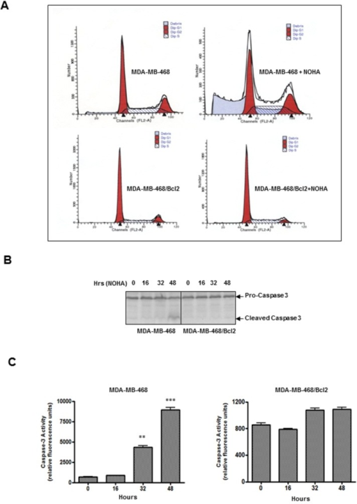 Inhibition of NOHA-induced apoptosis in Bcl2 over-expressing MDA-MB-468 (MDA-MB-468/Bcl2) cells.A, Control MDA-MB-468 or MDA-MB-468/Bcl2 cells were treated either with vehicle or NOHA (1mM) for 48 hrs, stained with propidium iodide and cell cycle analysis was performed. B, 75µg of total protein lysates were electrophoresed on 4-15% SDS/PAGE, transferred to PVDF membrane and analysis of proteolytic cleavage of caspase-3 in various treatments was performed by western blot analysis. C, Caspase-3 enzymatic activity in MDA-MB-468 (left panel) and MDA-MB-468/Bcl2 cells (right panel) treated with NOHA (1mM) for various time-points were analyzed. *, p≤ 0.05; **, p≤0.01.