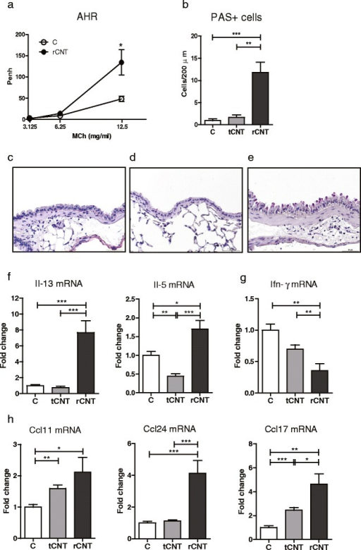 Inhalation to rCNT induces AHR, mucus secretion and induction of Th2 type cytokines in the lungs. a: BALB/c mice exposed to rCNT for 4 h/day on 4 consecutive days showed enhanced AHR to metacholine on day 5. b-h: using the same exposure schedule, C57BL/6 mice were exposed to tCNT or rCNT and sacrificed on the following day. b: PAS-stained lung sections were used to determine the numbers of mucin-producing goblet cells. c-e: representative images of PAS-stained lung tissue of an untreated mouse (c) and mice exposed to tCNT (d) and rCNT (e) that show markable activation of mucin-producing cells in lungs of rCNT-exposed but not in tCNT-exposed mice. f, g: the mRNA expression levels measured in lung tissue revealed an upregulation of Th2 type cytokines Il-13 and Il-5 (f) and downregulation of Th1 cytokine Ifn-γ (g) after exposure to rCNT. h: furthermore, mRNA expression of eosinophil-attracting chemokines Ccl11, Ccl24 and Ccl17 was triggered in lungs by rCNT. Results of AHR measurements (a) are expressed as mean enhanced pause values (Penh) ± SEM (n = 9-11). PAS + cell counts (b) represent the average of positive cells per 200 μm of bronchus surface counted from three bronchi per mouse in control group and six bronchi per mouse in CNT-exposed groups (n = 10-20). Images c-e are shown at x400 magnification with a 50 μm scale bar. mRNA expression levels measured by qRT-PCR are presented as fold changes compared to untreated control mice (n = 10-20). *P < 0.05; **P < 0.01; ***P < 0.001. MCh, metacoline; C, control group.